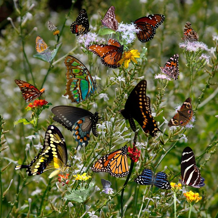 Hobbies in Nature - Butterfly Basics